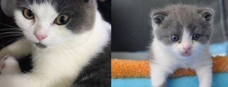 В Китае удалось успешно клонировать котенка