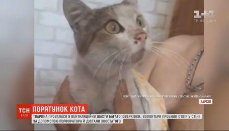 Спецоперацію довелося влаштувати в Харкові, аби звільнити з пастки кота