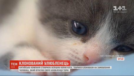 Китайська компанія успішно створила копію кота