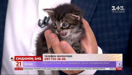 Два месячных котенка ищут семью