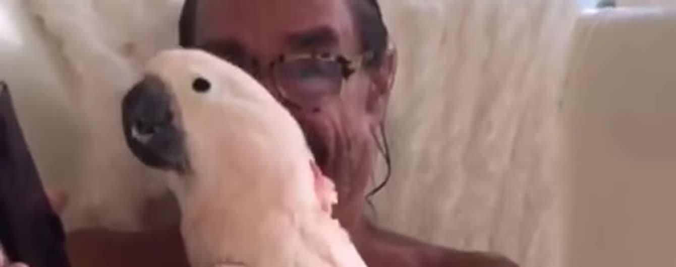 Качает даже попугая. Любимая птица Игги Попа лихо сплясала под его новый хит