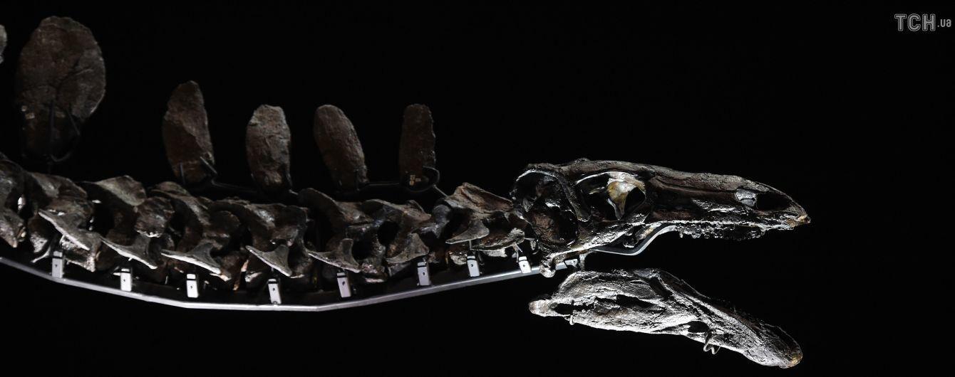 В Марокко нашли древнейшего динозавра на Земле. Он жил 168 млн лет назад