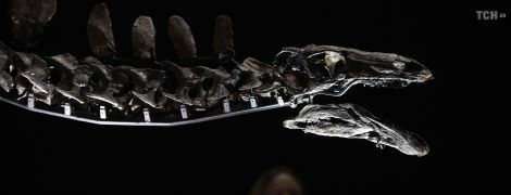 У Марокко знайшли найдавнішого динозавра на Землі. Він жив 168 млн років тому
