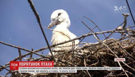 На Сумщині селяни опікуються пташеням лелек, якого полишили батьки