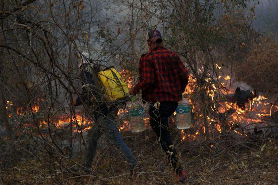 Понад 1,8 млн гектарів у вогні: амазонські ліси Болівії теж охопили рекордні пожежі