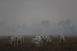 Макрон, Роналду и другие: известные люди активно публикуют в своих соцсетях фото пожаров лесов Амазонии. Оказалось, что большинство из них фейковые