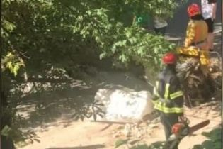 В Киеве на женщину упало дерево: у пострадавшей поврежден позвоночник