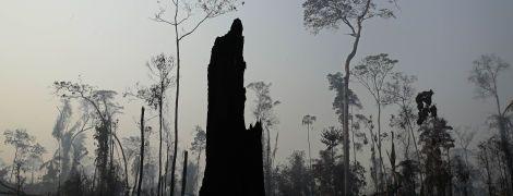"""Так помирають """"легені планети"""". У Бразилії не вщухають пожежі в Амазонських лісах"""