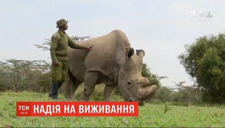 Итальянские ученые надеются возродить популяцию белых носорогов