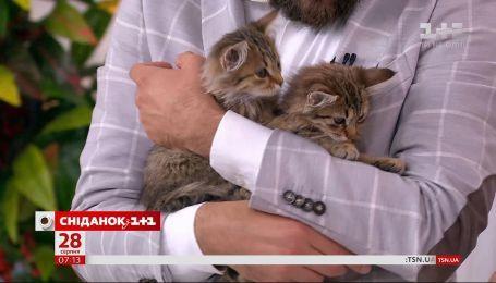 Трое котят ищут заботливых хозяев