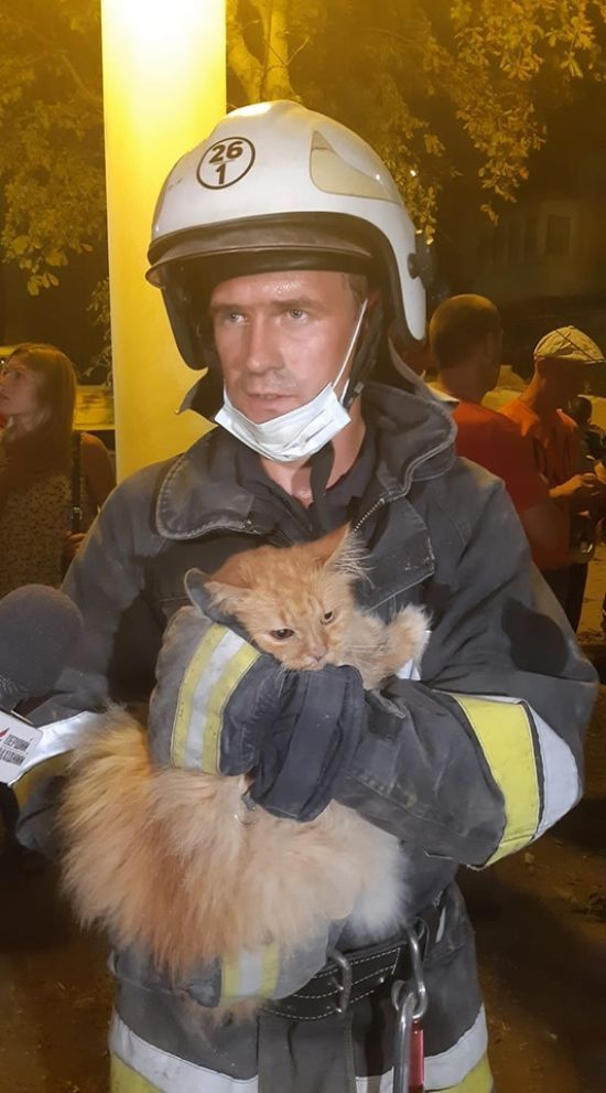 У Дрогобичі рятувальники з-під завалів будинку витягли кота