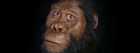 Медленное взросление: ученые проанализировали мозг австралопитеков и нашли сходство с современными людьми