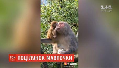 Поцелуй обезьянки, медведи-дегустаторы, фестиваль фейерверков: новости с онлайн-трансляции