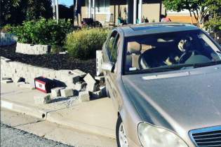 """Собака """"угнала"""" Mercedes и устроила аварию в Америке. Фото"""