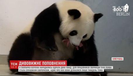 В зоопарке Берлина родились сразу двое панд