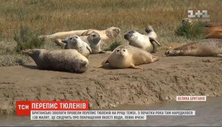 Британские зоологи провели перепись тюленей в устье Темзы
