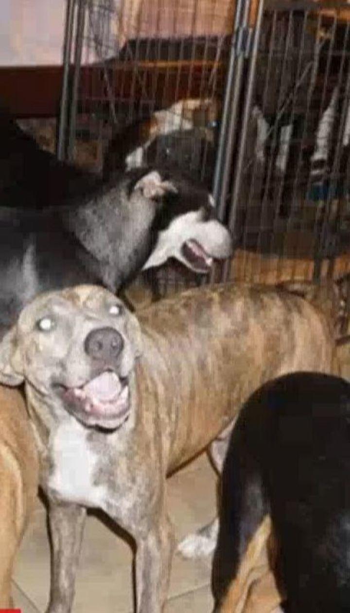Жительница Багамских островов спасла от урагана 97 собак