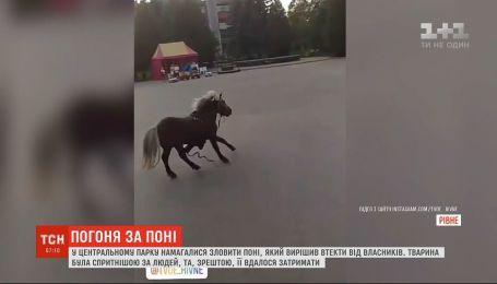 У центральному парку Рівного ловили поні, який вирішив втекти від власників