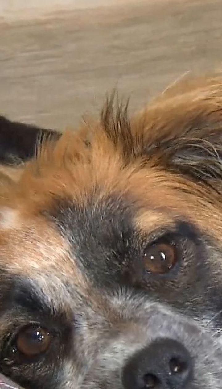 Допомога для найслабших: у Польщі відкрився перший притулок для хворих собак
