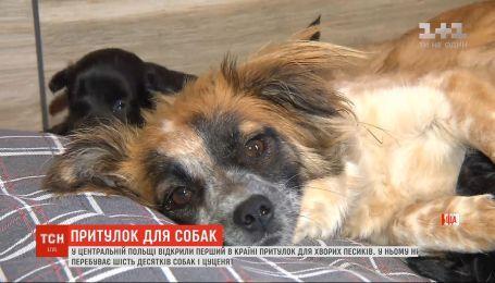 Помощь для самых слабых: в Польше открылся первый приют для больных собак