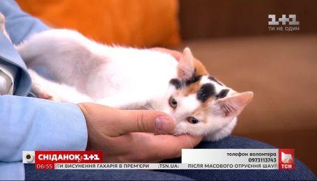 Котята Альф, Гудзя и Блэк ищут заботливых хозяев