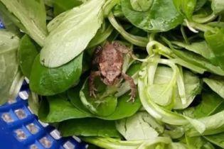 В Германии мужчина нашел живую лягушку в салате из супермаркета