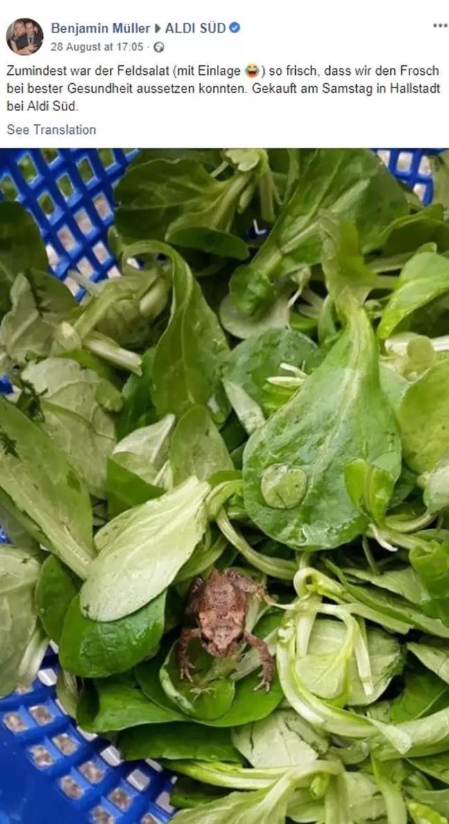 жаба салат альді