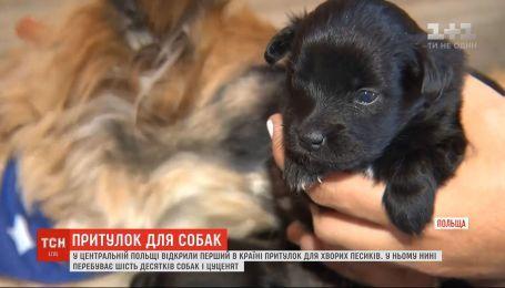 Приют для больных собак открыли в Польше