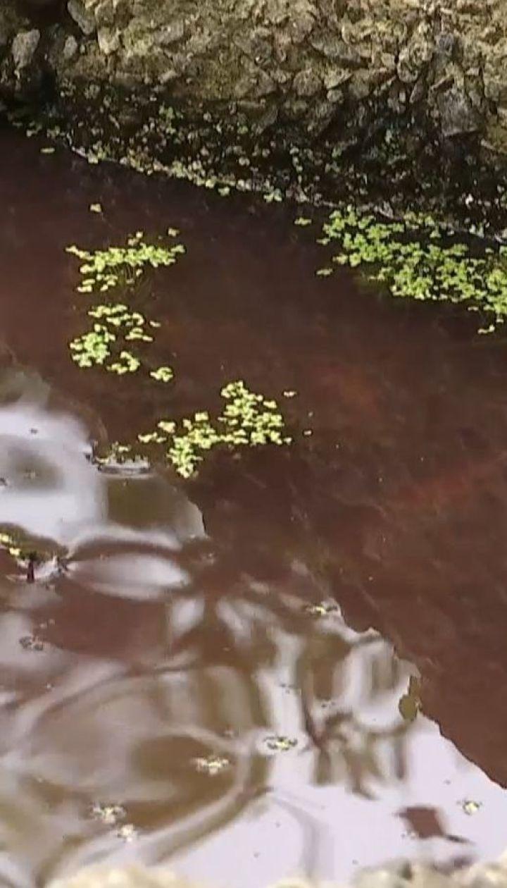 Озеро на Осокорках стало червоним - там зникла ряска і загинула риба