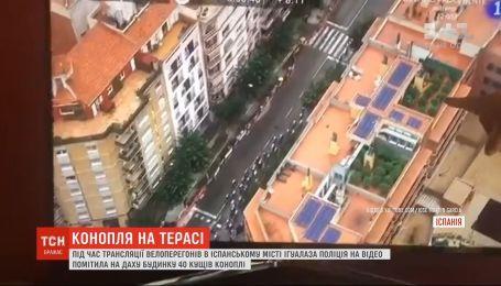 В Испании правоохранители на крыше дома случайно заметили плантацию конопли