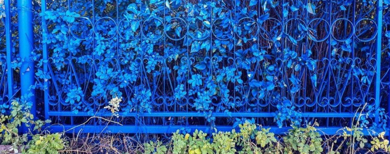 В российской школе забор закрасили вместе с растениями