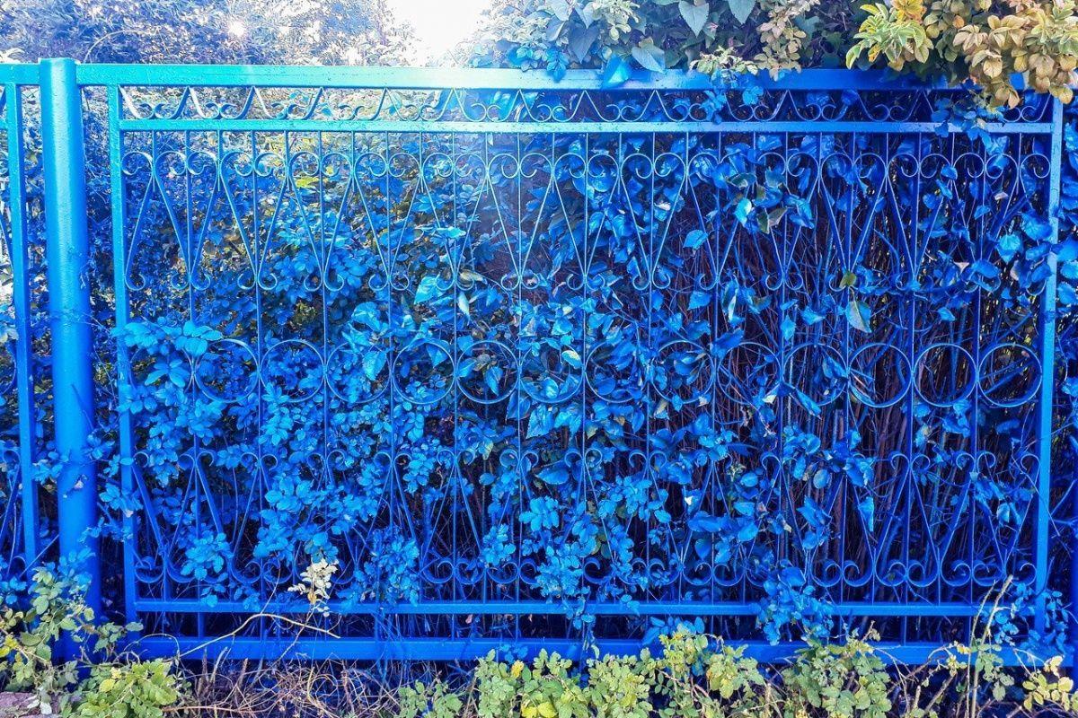 паркан фарба рослини РФ