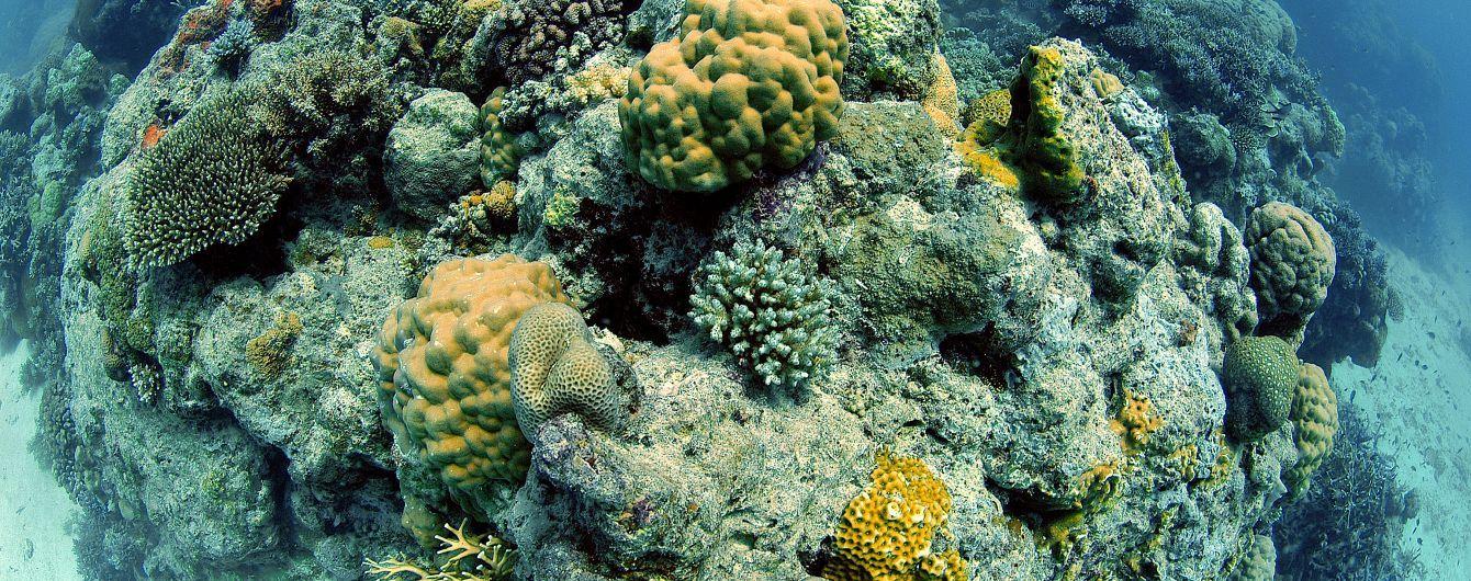 """Стан Великого бар'єрного рифу погіршився до """"дуже поганого"""". Чому помирає кораловий гігант та чи можна ще його врятувати"""