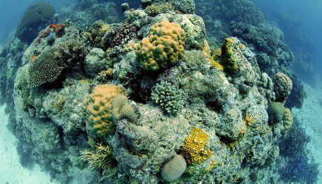 Чому помирає Великий бар'єрний риф та чи можна ще його врятувати