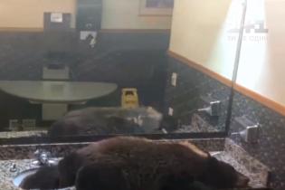 В США сняли медведя, который задремал на раковине гостиничного номера