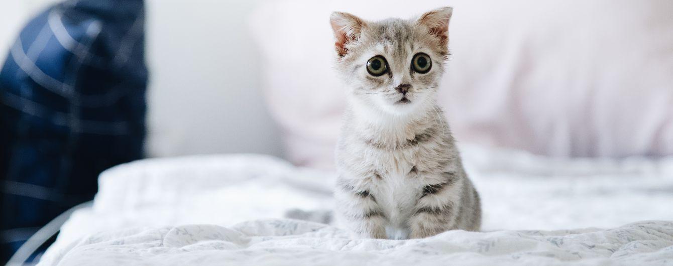 В Виннице мужчина получил 5 лет тюрьмы за то, что выбросил кошку из окна, а потом добил об асфальт