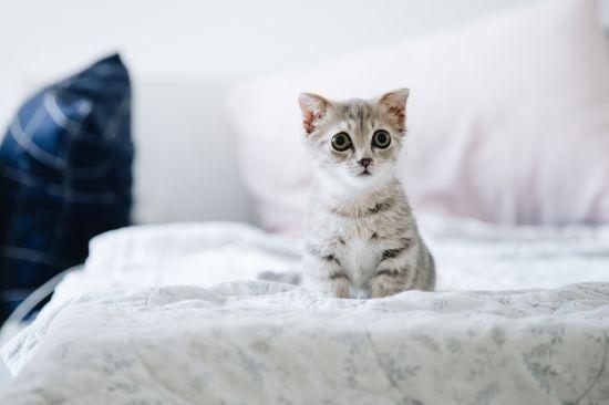 Котячі історії: як улюбленець синопткині Наталки Діденко займається благодійністю