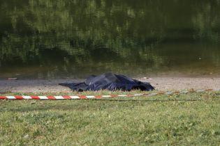 Із київського озера на Теремках дістали тіло жінки