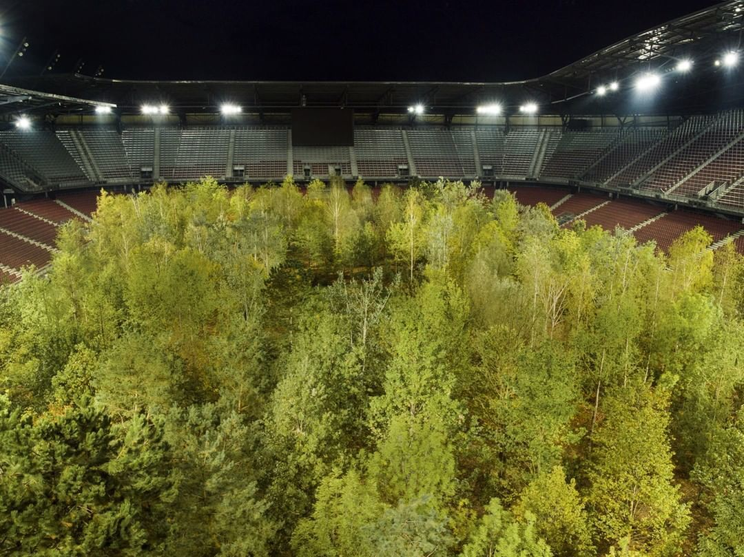 інсталіція Клауса Літтманна ліс на стадіоні_2