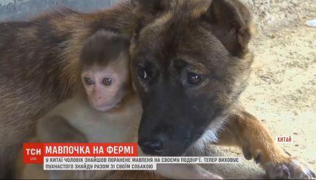 В Китае мужчина нашел раненую обезьянку в своем дворе