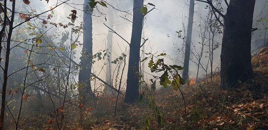 На Житомирщині лісові пожежі охопили 100 гектарів території
