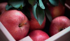 В Украине подорожали яблоки: сколько стоит фрукт