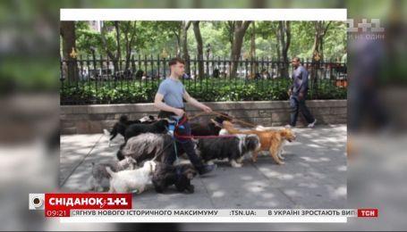 Папарацци подловили Дэниела Рэдклиффа на улицах Нью-Йорка в компании десятка собак