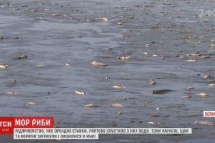 Массовый мор рыбы на Волыни спровоцировали предприниматели на арендованных прудах