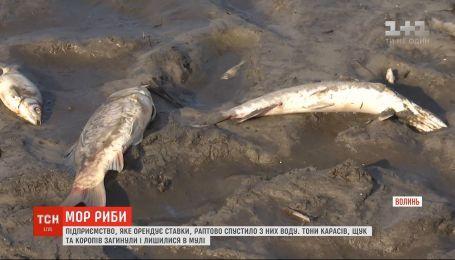 В селе на Волыни массово погибла рыба: экоинспекция выясняет причину