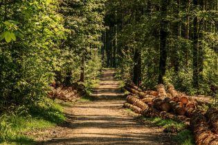 Прокуратура разоблачила в Днепропетровской области преступную группу, которая занималась незаконной вырубкой леса