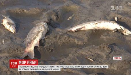 Массовый мор рыбы произошел на Волыни: предприятие-арендатор спустило из прудов воду