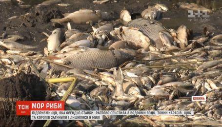 Через раптове зникнення води зі ставків на Волині масово загинула риба
