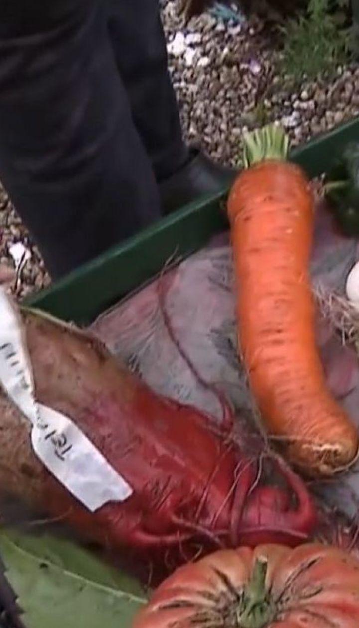 Німецький фермер уже шість років вирощує велетенські кілограмові овочі