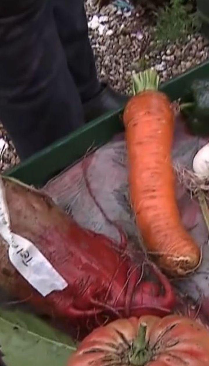 Немецкий фермер уже шесть лет выращивает гигантские килограммовые овощи
